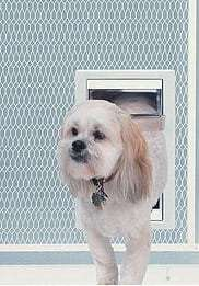Dog using Medium pet door for screen