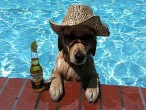 Summer time and our Pets
