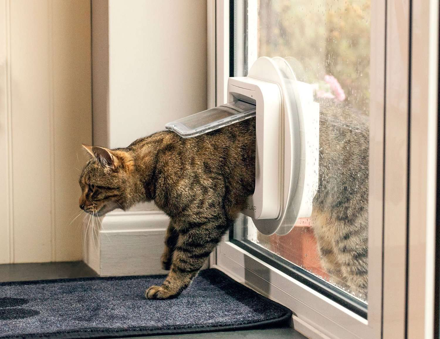 Cat useing Micro Chipped Door