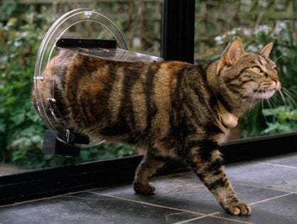 Cat doors for glass