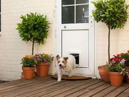 Dog Doors for Timber