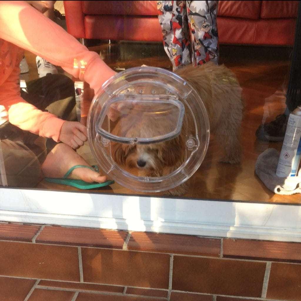 Dog Doors In Glass Sydney Wide Pet Doors