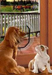 Dogs using pet glass door