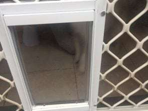 screen dog door