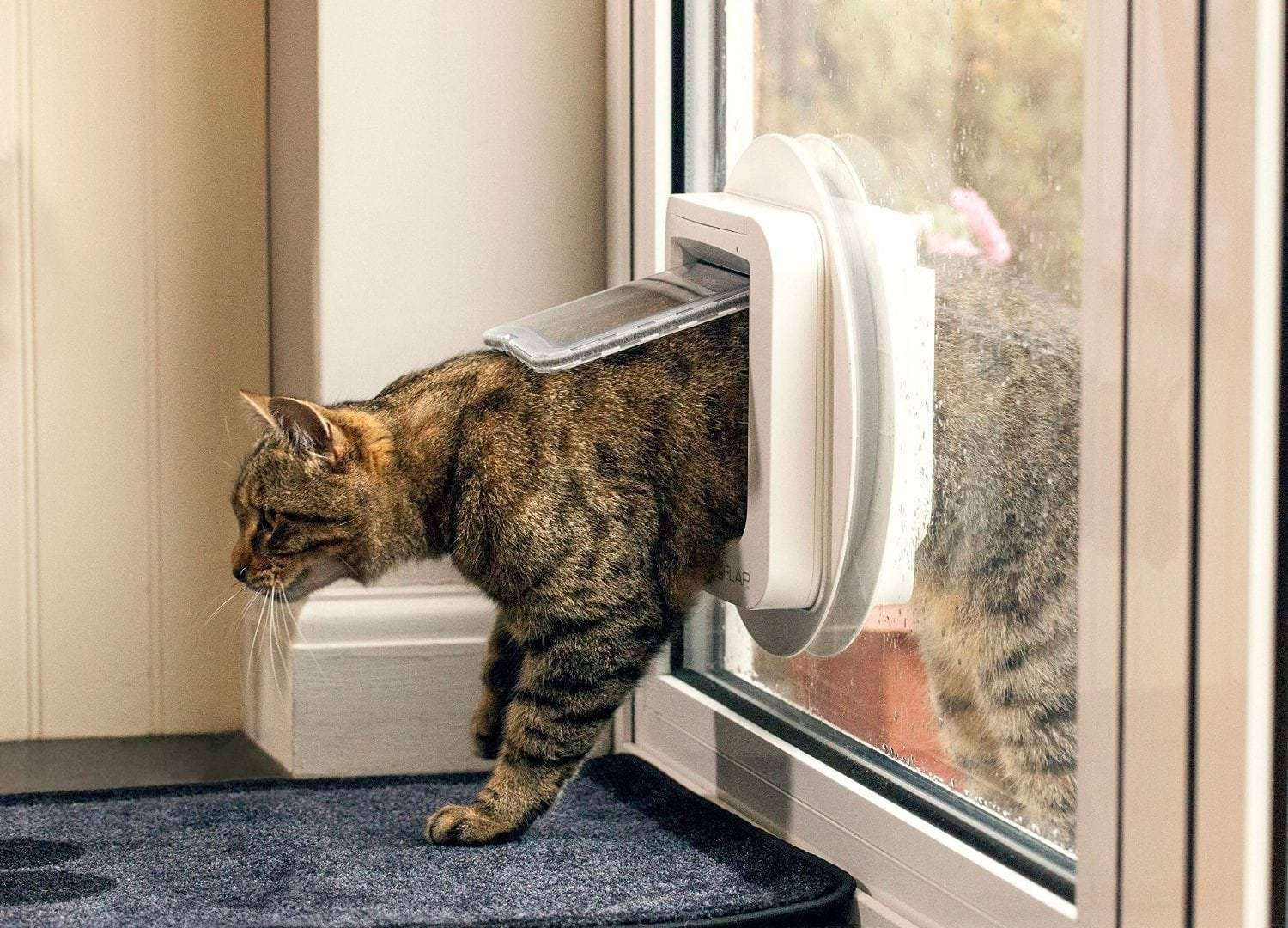 Cat Doors: How to Choose the Perfect One