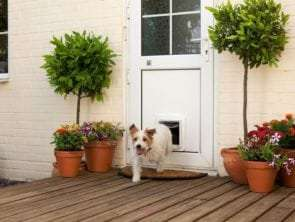 7 Things to Consider When Buying a Dog Door – Sydney Wide Pet Doors