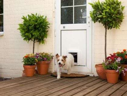 7 Things to Consider When Buying a Dog Door - Sydney Wide Pet Doors
