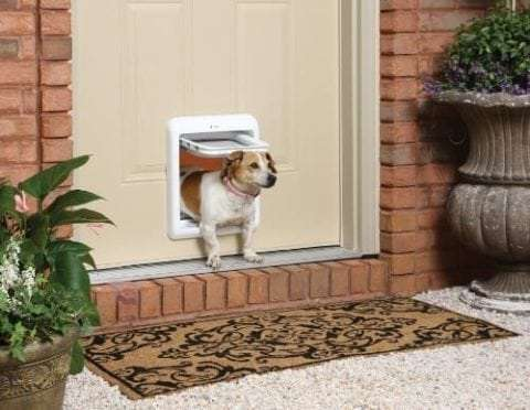 dog coming through a surflap dog flap