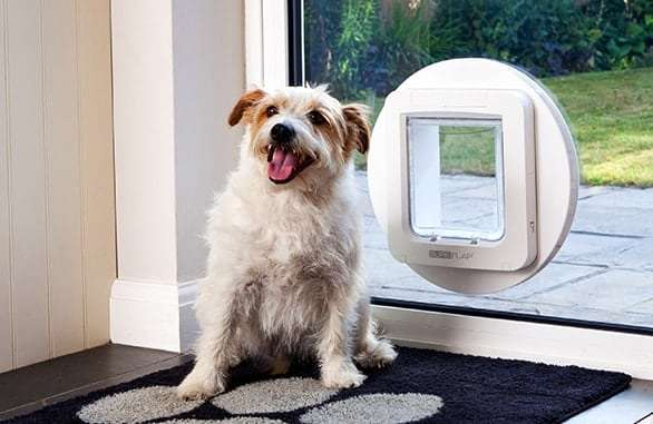 dog in front of a dog flap