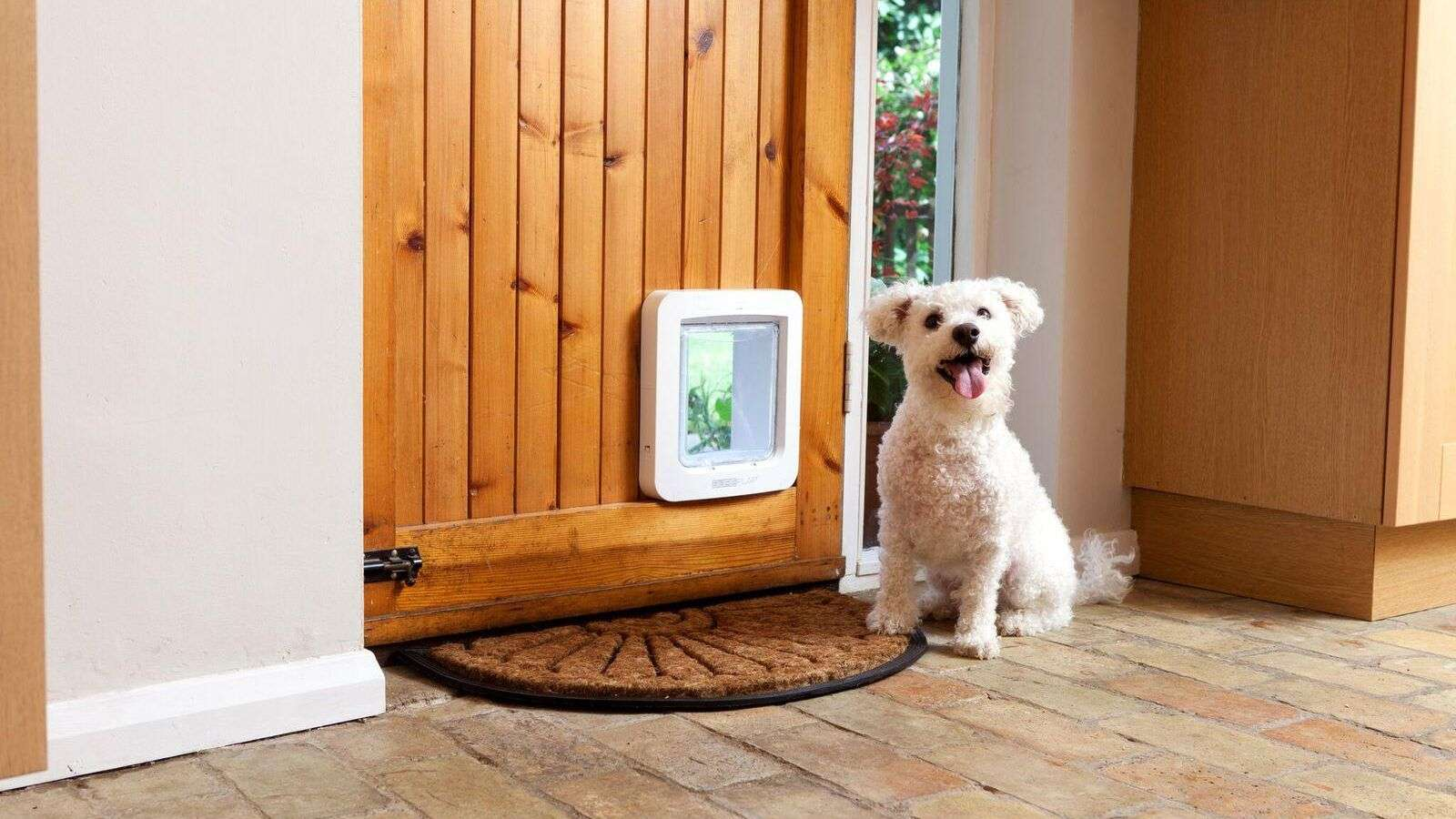 dog in front of a microchip dog door