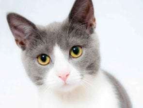 A Complete Guide for Cat Care: How to Take Care of Your Pet