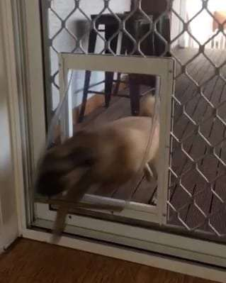 Medium dog door into screen door