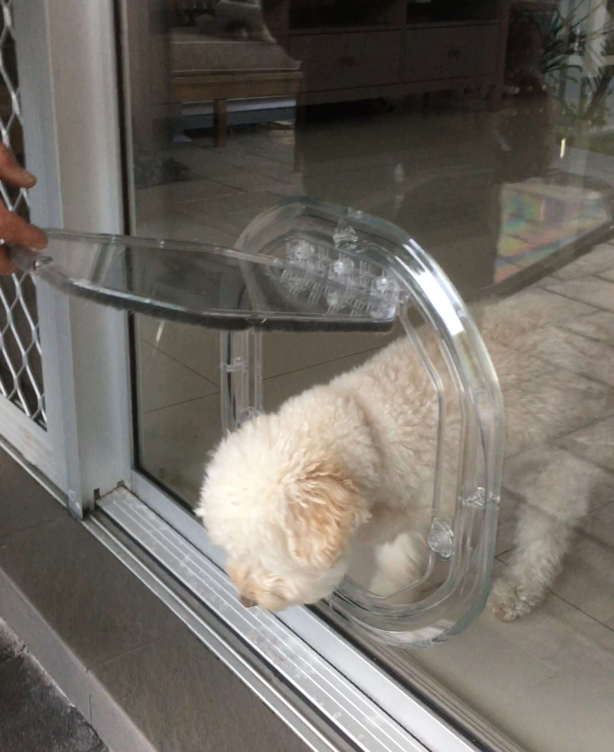 small dog door for glass