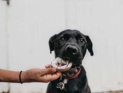 8 Amazing Homemade Dog Food Recipes Your Dog Would Love