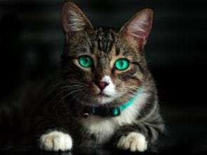 15 Interesting Cats Facts