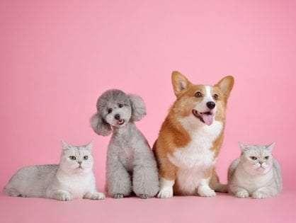 A Detailed Guide to Pet Door Manufacturers: Petway, Ideal, SureFlap & Pet-Tek