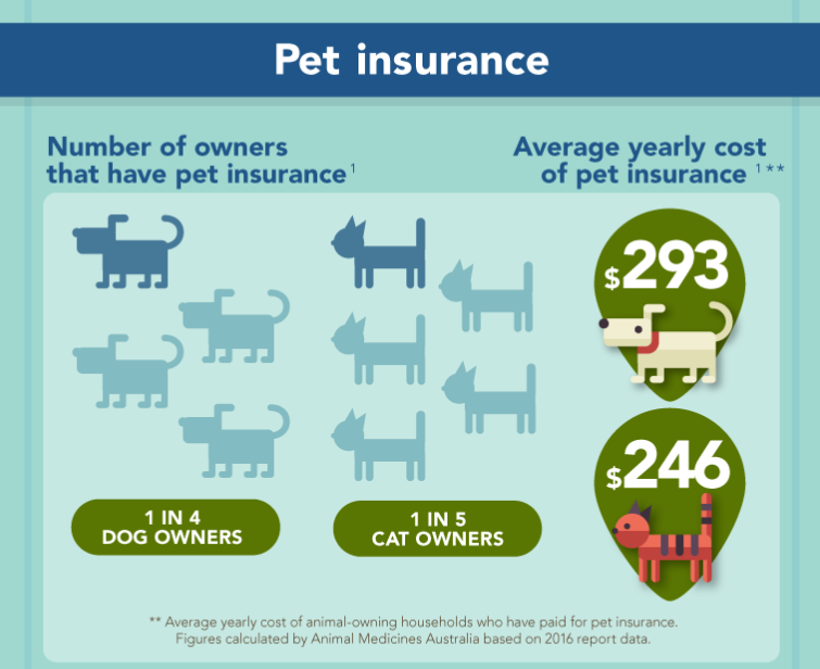 Things to Look out for When Buying Pet Insurance