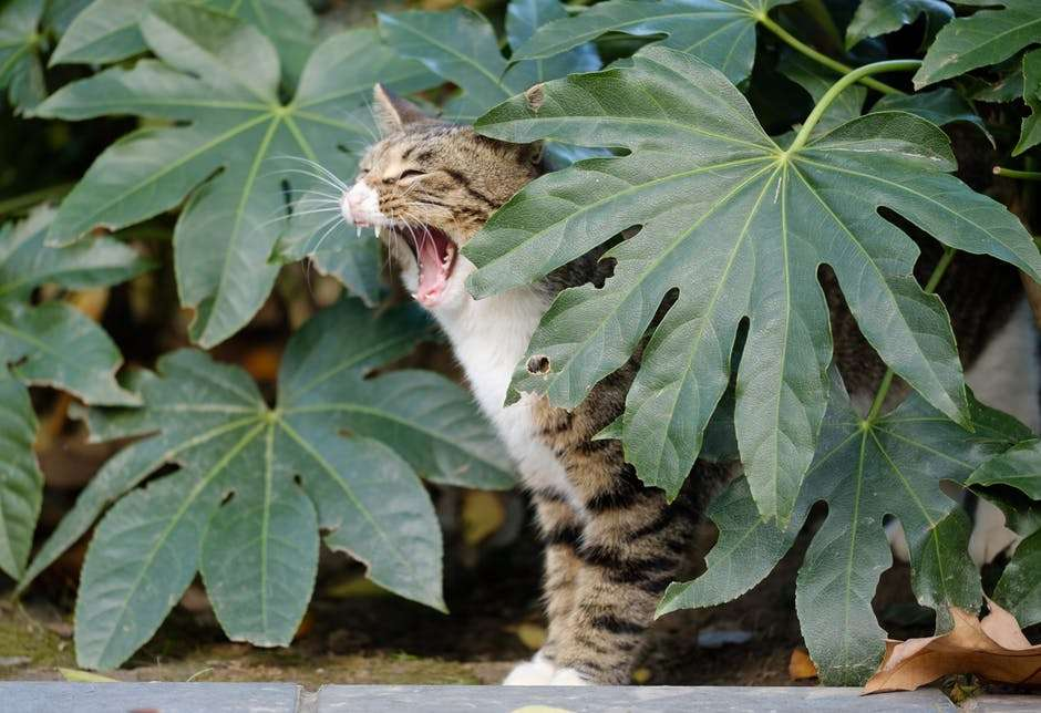 cat curfew