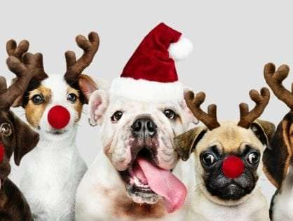 The Best 10 Dog Christmas Gifts for Dog Owners