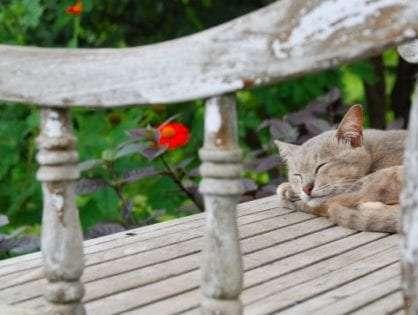 Cat Curfew: Australia's Efforts to Save Its Native Wildlife