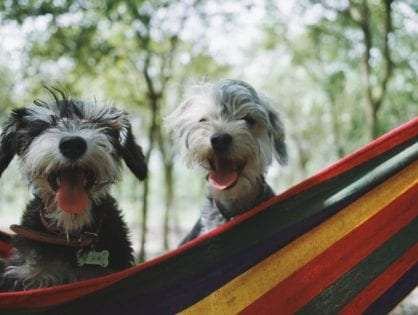 How to Socialize Your Dog With Other Animals and People