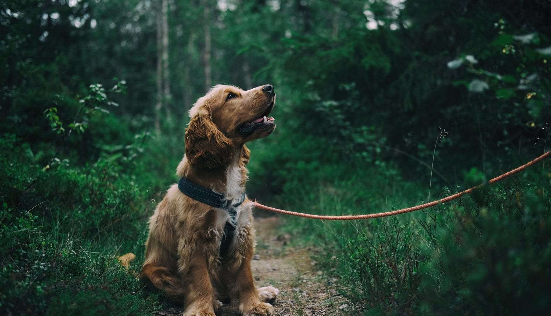 Dog Walking: What Are the Health Benefits for You and Your Dog
