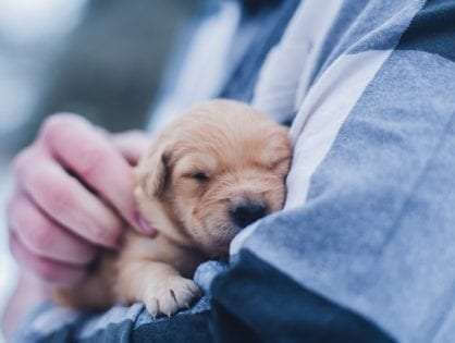 Puppy Vaccinations: Why Is so Important for Your Pet's Health