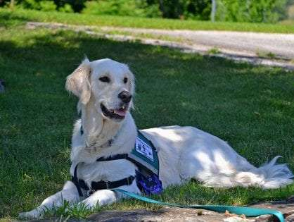 Everything You Need to Know About Assistance Dogs in Australia