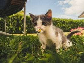 15 Cat Exercises That Can Keep Your Pet Healthy and Happy