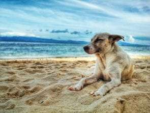 6 Dog-Friendly Beaches in and Around Sydney That Your Pet Will Love