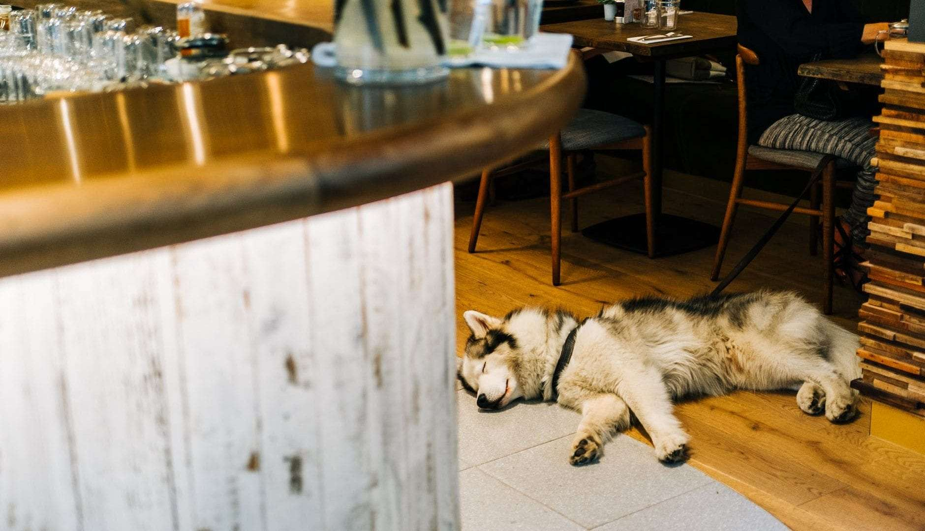 The 8 Most Charming Dog-Friendly Cafés in Sydney