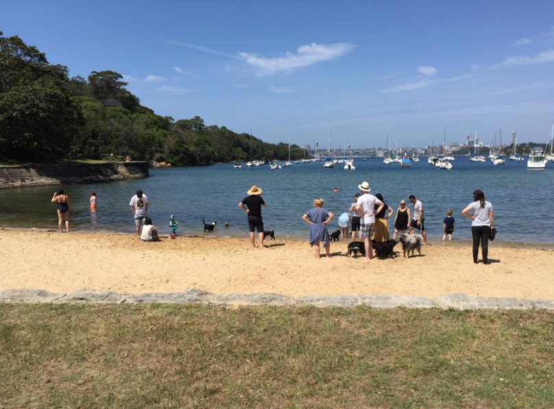 dog friendly beaches Sydney