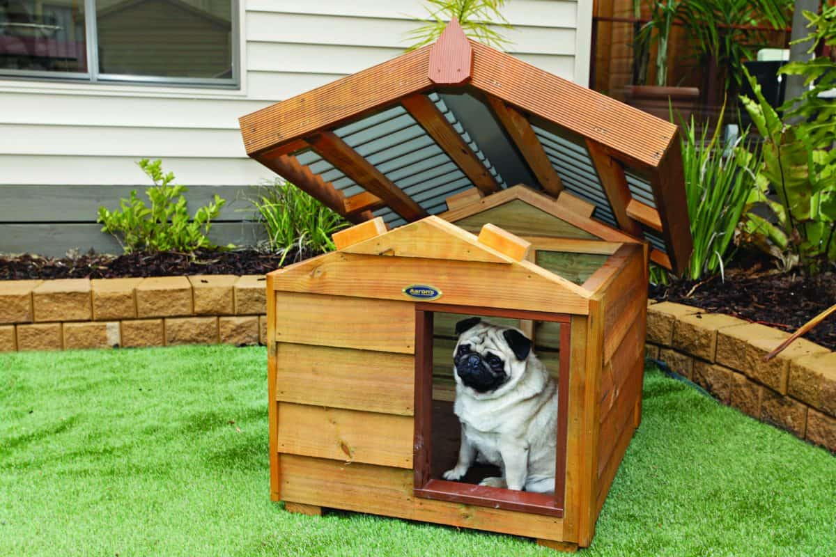 Dog House: The Ultimate Guide to Buying One in Sydney