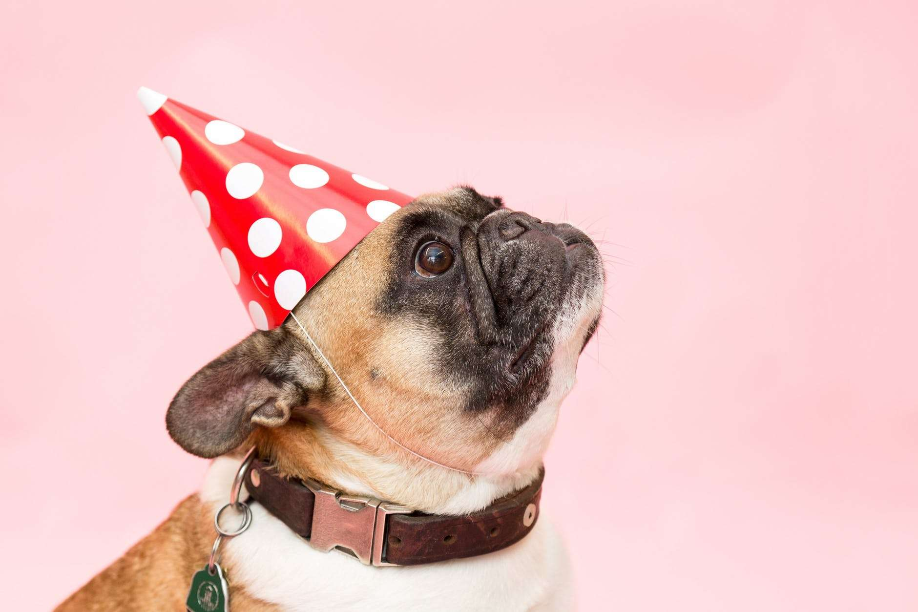 8 Dog Birthday Ideas to Show Your Love and Appreciation